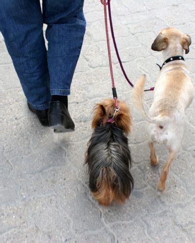 loose leash walking   dog put