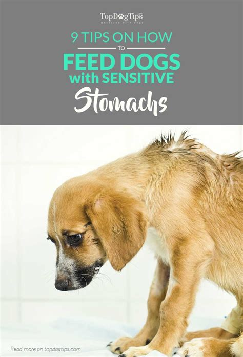 tips    feed dogs  sensitive stomachs