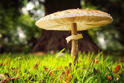 Types Of Fungi (classification System