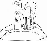 Camel Coloring Pages Camels Printable Insects Caravan Sally Desert Cliparts Drawing Cartoon Template Loaded Through Getdrawings Bactrian Library Clipart Sheets sketch template