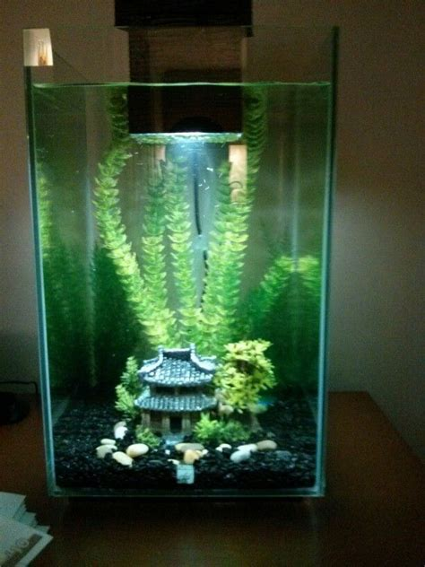 my 25 ltr fluval chi set up aquarium decoration