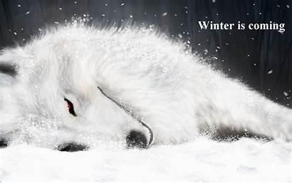 Winter Coming Wolf Rain Anime Background Abyss