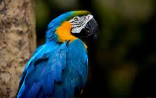 Beautiful Tropical Birds Names