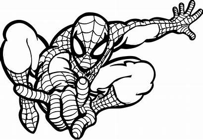 Grid Spider Coloring Produce Projects