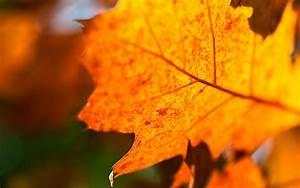 autumn orange leaves - HD Desktop Wallpapers | 4k HD
