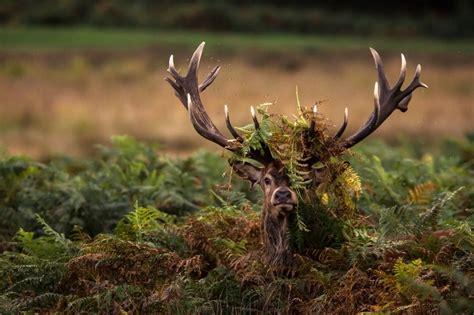 nature photography award winners revealed scottish rural