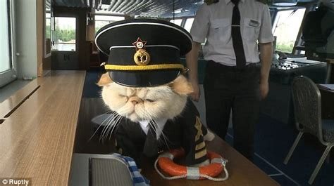 Dog Boat Captain Hat by Meet Cat Captain Sailor Who Is Proving To Be A Top