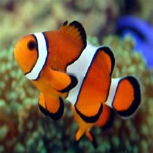 Marine Fish including Clown Fish from our Aquarium Shop in