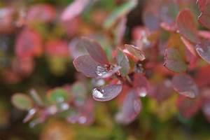 Wann Heidelbeeren Pflanzen : heidelbeerstrauch pflanzen pflanzen heidelbeerstrauch f r den garten heidelbeeren pflanzen ~ Orissabook.com Haus und Dekorationen