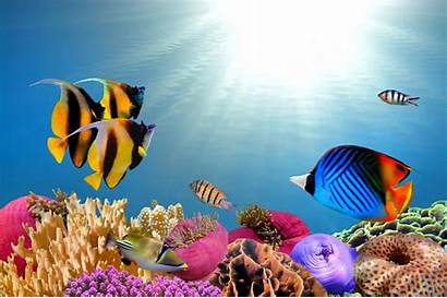 Wallpapers Computer Backgrounds Desktops Fish Tropical Laptop