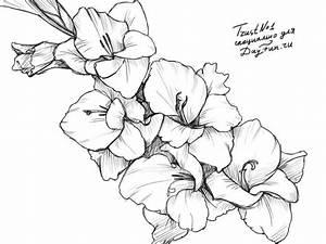 How to draw a gladiolus step by step | ARCMEL.COM