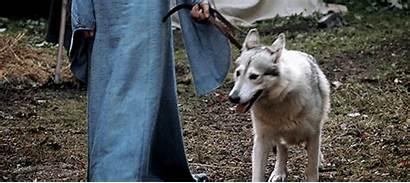 Dog Inuit Northern Utonagan Breeds Wolf Wolfdog