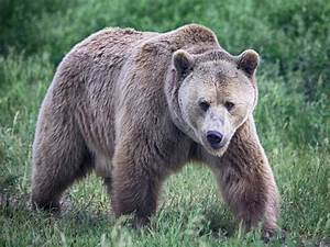 Grizzly's bite sets off can of bear spray in woman's hand ...  Grizzly