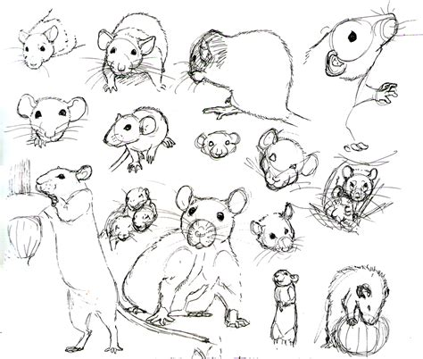 rat practice 10 by never mor on deviantart