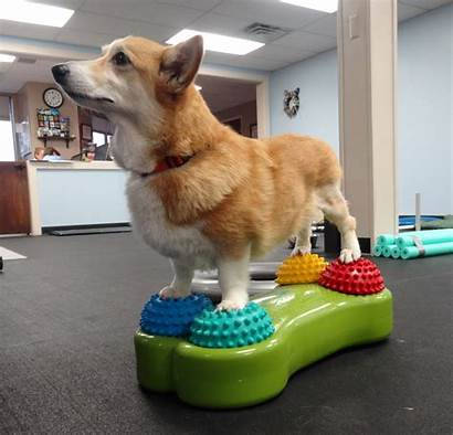 Rehabilitation Dog Surgery Pets Therapy Physical Canine