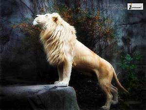White Lion Wallpapers - Wallpaper Cave