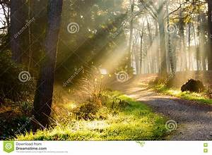 Path, In, Forest, With, Rays, Of, Sunlight, Falling, On, It, Stock, Image