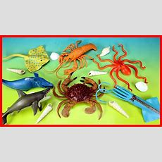 Learn Sea Animals Names And Facts  Water Animals For Kids Youtube