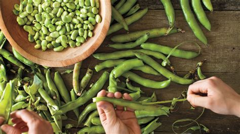 fava bean recipes martha stewart