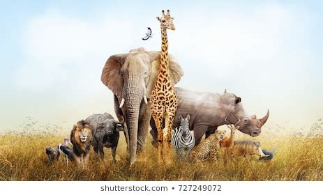 Large Group of Animals Images Stock Photos & Vectors