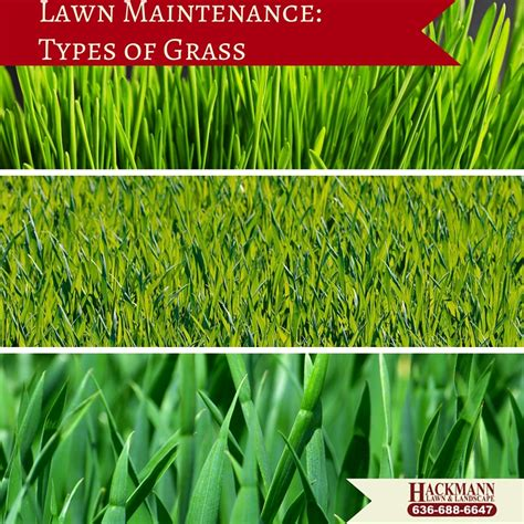 types of grasses lawn maintenance types of grass hackmann lawn landscape