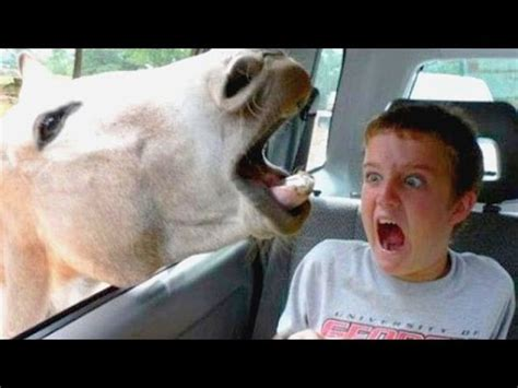 Hilarious Images Funniest And Most Hilarious Moments On Earth That Can Make