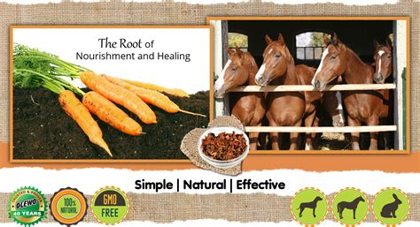 horses carrots daily horse olewo stools loose parasites digestive chronic intestinal diarrhea relieve prevent issues help interactions reader