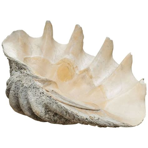 Large Clam Shell Decoration - 267 best images about decor on blue and white