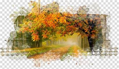 Autumn Nature Drawing Painting Leaf Watercolor Tree