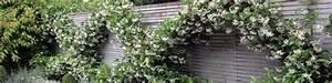 Kletterpflanzen Für Balkon : kletterpflanzen f r balkon terrasse online ~ Buech-reservation.com Haus und Dekorationen