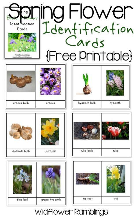 bulb plant identification www pixshark images