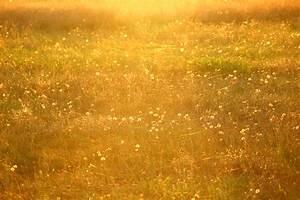 Rasen Düngen Bei Sonne : kostenlose foto gras sonne feld rasen wiese l wenzahn pr rie sonnenlicht morgen ~ Indierocktalk.com Haus und Dekorationen