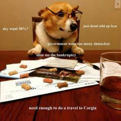Accountant Dog Meme - 226 best bork memes images on pinterest doggies dogs and funny pets