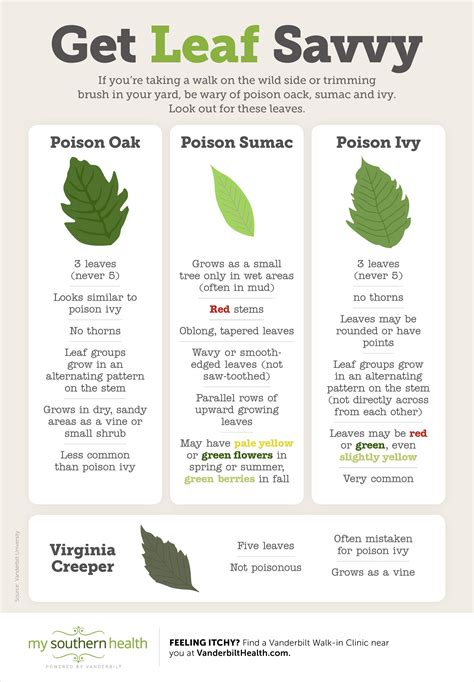 Infographic Learn To Identify Poison Ivy Oak And Sumac