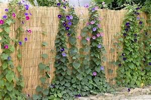 Arbuste Brise Vue : 11 id es de brise vue pour tre tranquille au jardin brise vue brise et tranquille ~ Preciouscoupons.com Idées de Décoration