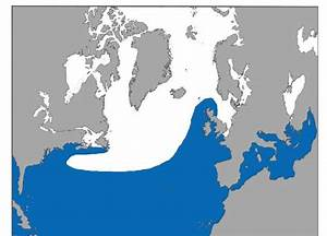 Main North Atlantic Distribution Of Risso U0026 39 S Dolphin