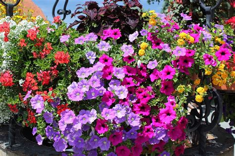 fiori da balcone primavera estate fiori a cascata in primavera 10 idee vita donna