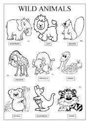 wild animals esl worksheet  famosa
