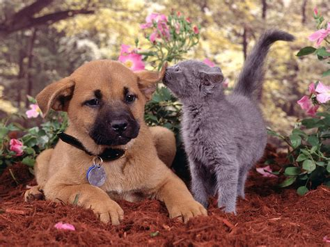 Cat And Dog Cats And Dogs Fun Animals Wiki Videos Pictures Stories