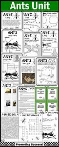 Ant Activities  Literacy Science Emergency Sub Plans  Ant