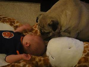 Dogs And Babies Sleeping Are What The World Needs Now printertml