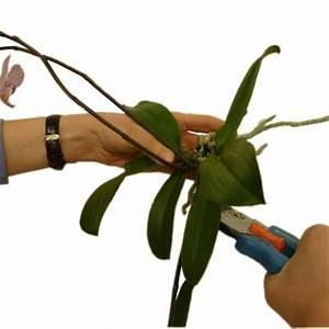 Luftwurzeln Bei Orchideen : orchideen pflege f r die exotischen sch nheiten liebe deinen garten ~ Frokenaadalensverden.com Haus und Dekorationen