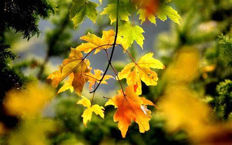 trees  autumn colour  telegraph