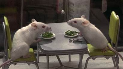 Mice Human Nature Giphy Gifs Lunch Gondry