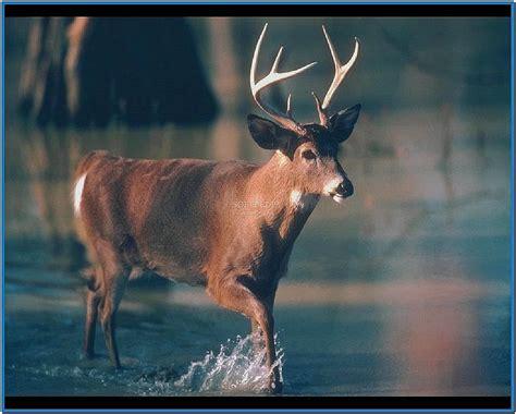 deer screensaver wallpaper