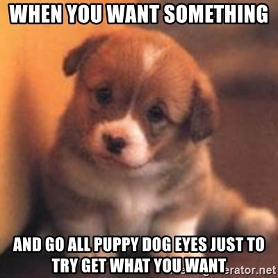 Puppy Dog Eyes Meme - when you want something and go all puppy dog eyes just to try get what you want cute puppy