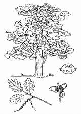 Tree Oak Coloring Angel Printable Pages Getcolorings Colorings sketch template