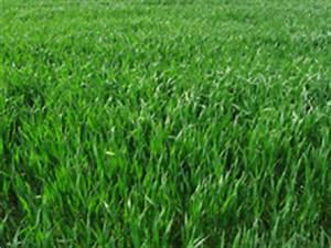 Semer Gazon Periode : gazon et pelouse l automne nos conseils ~ Melissatoandfro.com Idées de Décoration