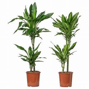 Plante Pas Cher