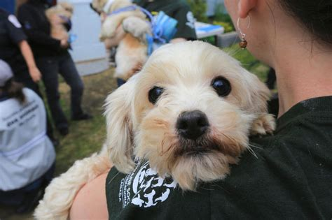 Rescued Puppies Ready For Adoption Vancouver  Hrs